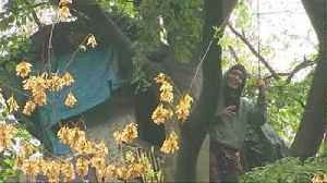 Police end Germany's five year treehouse protest [Video]