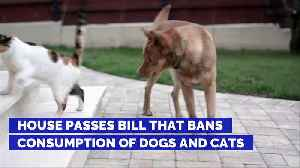 House Passes Bill That Bans Consumption of Dogs and Cats [Video]