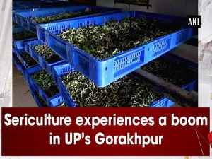 Sericulture experiences a boom in UP's Gorakhpur [Video]