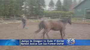 Judge To Rule If Horse Can Sue Former Owner In Oregon [Video]