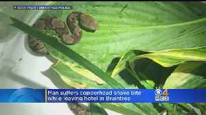 Police: Man Bitten By Venomous Snake While Leaving Braintree Hotel [Video]