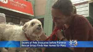 News video: Dozens Of Pets Evacuated Before Hurricane Florence Find New Homes