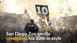 Frank the gorilla celebrates his 10th in style [Video]