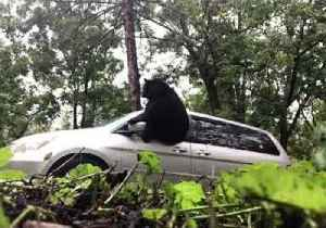 Bear Dramatically Escapes From Van in Asheville, North Carolina [Video]