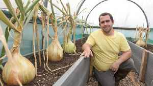 Sweet leeks are made of these! Allotment owner says stroking giant veg is his secret to making them so big [Video]
