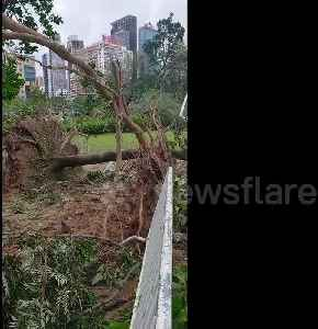 Massive trees uprooted in large public park after Typhoon Mangkhut slams Hong Kong [Video]