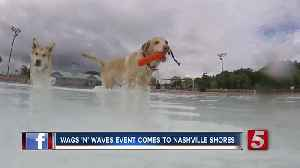 Nashville Shores Goes To The Dogs This Weekend With 'Wags 'N Waves' [Video]