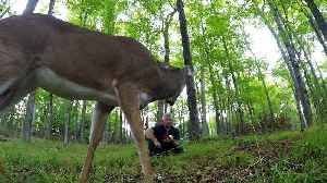 Man crunches apples in forest, deer comes to share [Video]