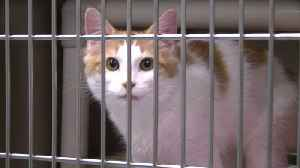 Virginia Animal Shelter Takes in Pets Affected by Florence [Video]
