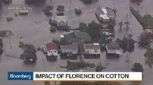 Cotton Adds Hurricane Florence Crop Losses to China Trade Woes [Video]