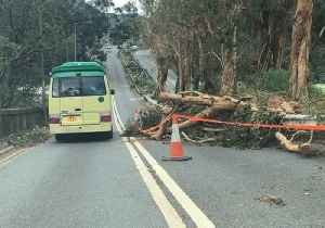 Fallen Trees Lie Strewn About Sai Kung in Typhoon Aftermath [Video]