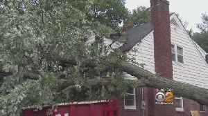 Microburst Topples Trees In New Jersey [Video]