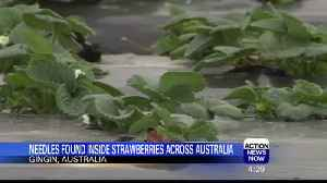 Needles Found Inside Strawberries Across Australia [Video]