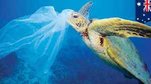 Half of world's sea turtles have already consumed plastic: Study [Video]