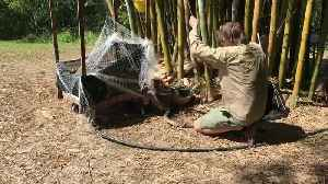 Eastern Brown Snaked Rescued from Net [Video]