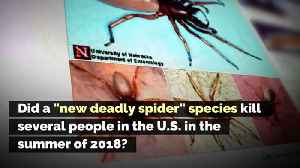 Did a 'New Deadly Spider' Species Kill Several People in the U.S. in the Summer of 2018? [Video]