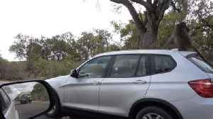 Cheeky monkey – Baboon hitch-hikes by climbing on top of a car [Video]