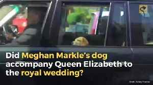 Did Meghan Markle's Dog Accompany Queen Elizabeth to the Royal Wedding? [Video]
