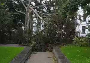 City Park in Galway Loses One of Its 'Oldest Trees' as Storm Hits [Video]