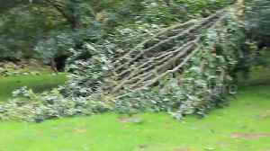 Trees felled, telephone wires destroyed in wake of Storm Ali [Video]