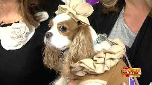 Previewing Petfest with Pups on Parade! [Video]