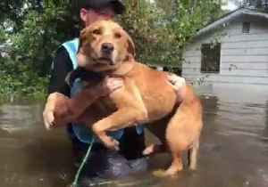 PETA Animal Rescue Team Saves Dogs and Cats Trapped by Floodwaters [Video]