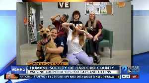 Good morning from Rosalia & the Humane Society of Harford County! [Video]