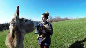 Donkey falls completely in love with baby goat friend [Video]