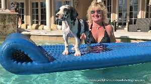 Great Dane puppy enjoys his first ride on pool floatie [Video]