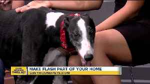 Rescues in Action Sept. 16: Flash needs forever home [Video]