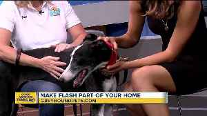 Rescues in Action Sept. 16: Flash needs furever home [Video]