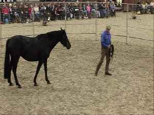 Saddling a Horse for the First Time in Under Thirty Minutes [Video]