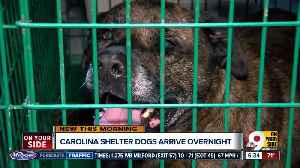 Carolina shelter dogs in the Tri-State [Video]