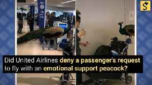 Did United Airlines Deny a Passenger's Request to Fly with Emotional Support Peacock? [Video]