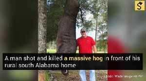 Alabama Man to Display Head of 820-pound Hog He Shot in His Yard [Video]