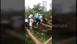 Commuters climb through fallen trees to get to work after Typhoon Mangkhut [Video]