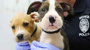 Puppies Found in Kansas With Hair Ties Around Their Mouths to Go Up for Adoption [Video]
