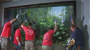 Academy Of Natural Sciences Reseals Two Of The Oldest Wildlife Habitat Scenes [Video]