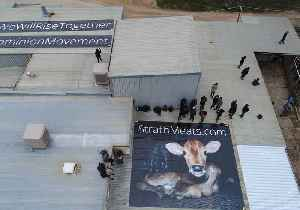 Activists Occupy Roof of Adelaide Slaughterhouse Accused of Animal Abuse [Video]