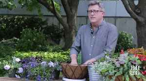 The Dirt: How to Plant a Hanging Basket [Video]