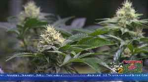Emergency Rooms Seeing Rise In Syndrome Related To Marijuana Use [Video]