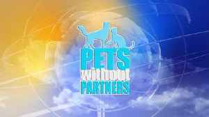 MidDay Guest 09/21 Pets Without Partners [Video]