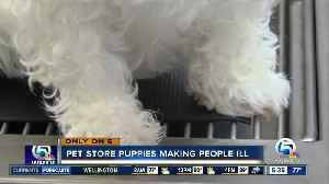 Pet store puppies making people ill [Video]