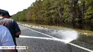 Fish Carried By Hurricane Florence Flood Waters End Up On Interstate [Video]