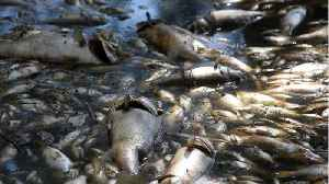 Hurricane Leaves North Carolina W/ Dead Fish All Over Their Roads [Video]