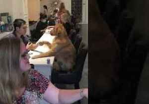 Pampered Pooch Receives a Paw-dicure [Video]