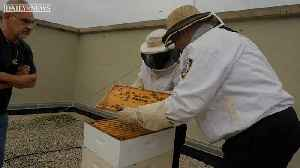 Meet the beekeepers of the NYPD [Video]