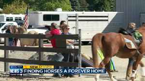 Finding horses a forever home [Video]