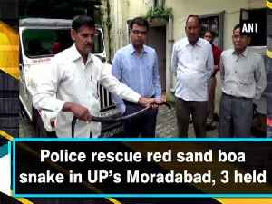 Police rescue red sand boa snake in UP's Moradabad, 3 held [Video]