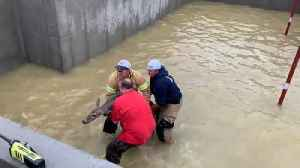 Firefighters Rescue Deer From Flooded Basement After Rainstorm [Video]